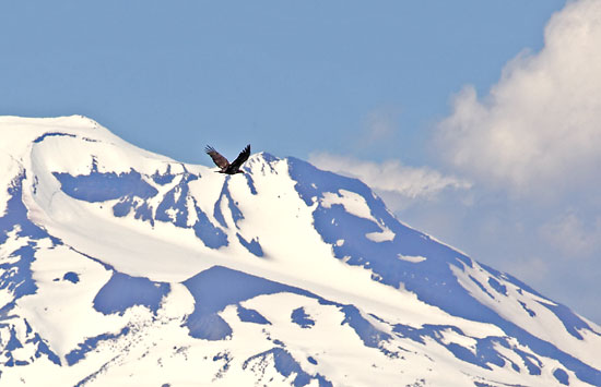 Flying Eagle, South Sister, Cascade Mountains Oregon.