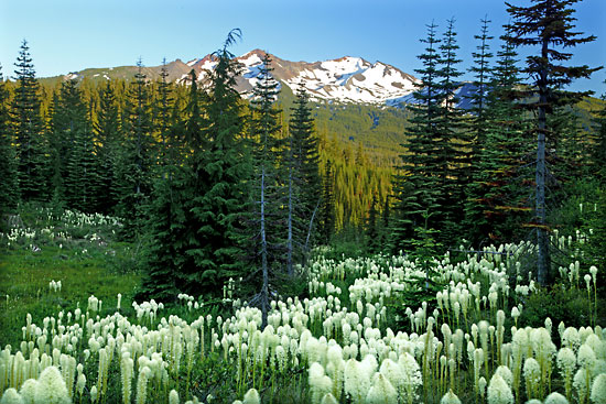 Beargrass, Diamond Peak, Cascade Mountains, Oregon.