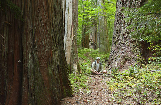 Self portrait Douglas Fir Western Red Cedar, Oregon Old growth.