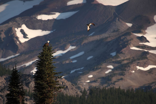 Eagle and Osprey, Sparks Lake and South Sister, Cascade Lakes, Oregon.