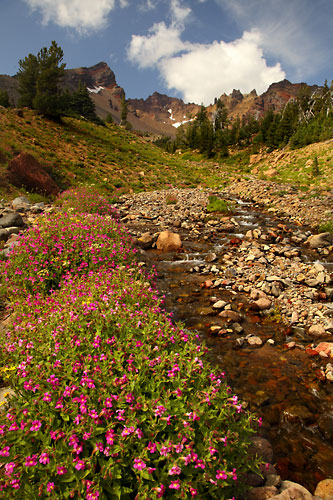 Wildflowers and Crater Creek, Broken Top Mountain, Cascade Mountains, Bend, Oregon