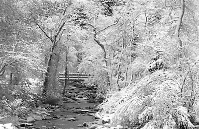 Big Cottonwood Creek, Wasatch Mountains, Utah Black and White Photography