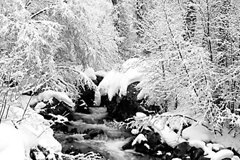 Black and White Photograph Big Cottonwood Creek, Wasatch Mountains, Utah