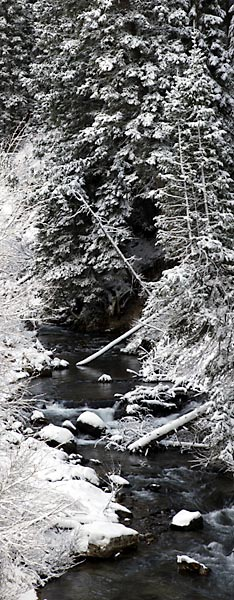 Big Cottonwood Creek, Wasatch Mountains, Utah Black and White Photograph