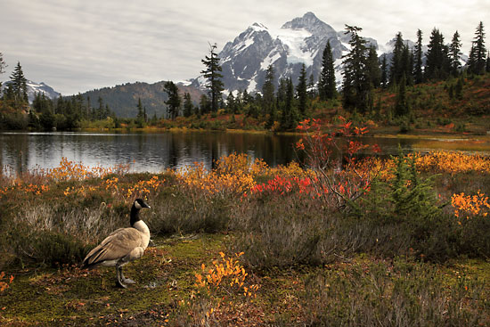 Mt. Shuksan Picture lake North Cascades National Park Washington Mt. Baker Autumn Foliage photographer David Whitten
