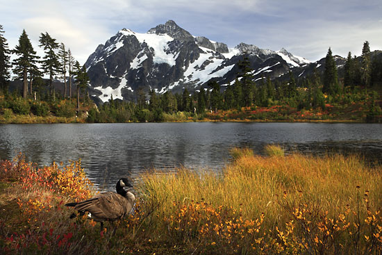 Mt. Shuksan Picture lake North Cascades National Park Washinton Mt. Baker Autumn Foliage Photographer David Whitten