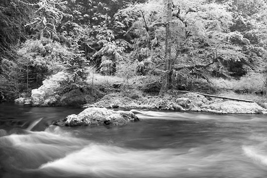 Salmon Creek, Frost, Willamette National Forest, Oregon Black and White Photograph