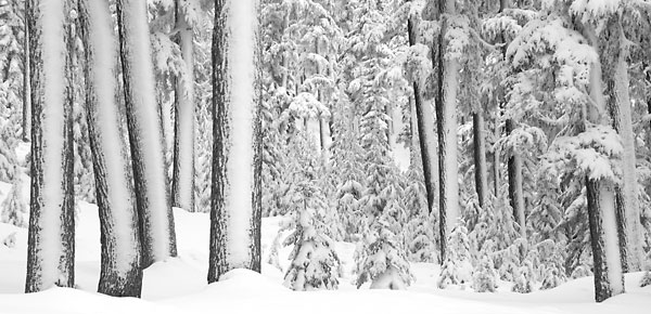 Winter Forest Snow Scenic Photography Black and White Photograph Cascade Mountains Mt Bachelor Oregon