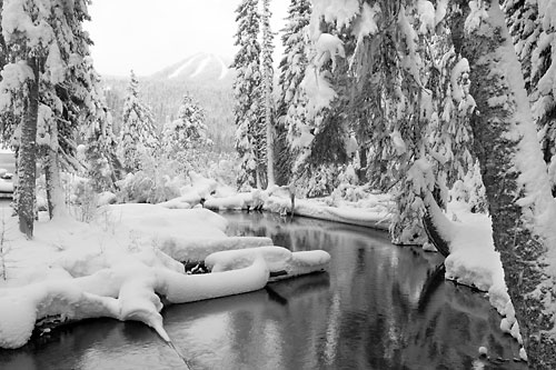 Trapper Creek, Cascade Mountains, Oregon limited edition print by photographer David Whitten Black and White Photograph