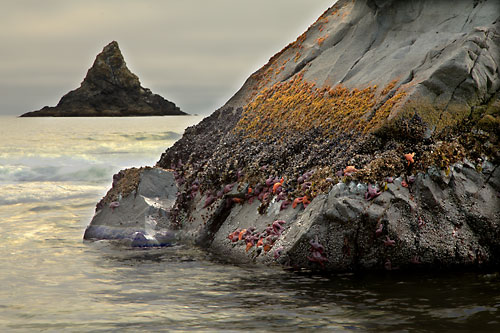 Low Tide, seastacks, sea stars, anemones, mussels and lots more,  Oregon coast - Photographer David Whitten