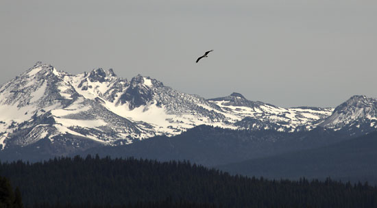 Osprey in Flight photo, Cascade Mountains, Oregon photograph, photographer David Whitten Photography