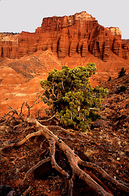 Capitol Reef National Park photograph, Utah