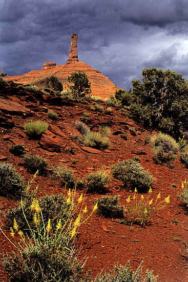 Castle Rock and wildflowers photo near Moab, Utah photography