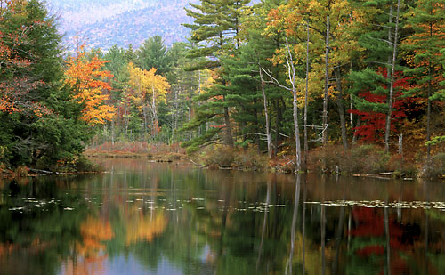 Red Eagle Pond White Mountains New Hampshire White Mountain National Forest Foliage