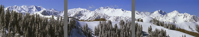 Photograph from The Canyons showing Baldy Snowbird Cardiac Bowl Dromedary and Twin Peaks Wasatch Mountains Utah