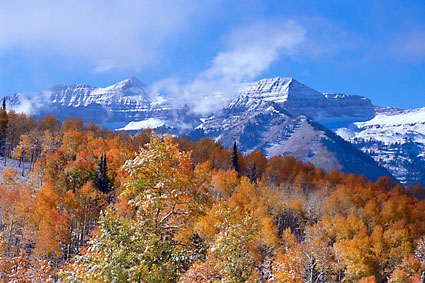 Mt. Timpanogos Utah Autumn Aspens in Snow Photograph Wasatch Mountains