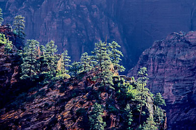 Zion Canyon, Zion National Park, Utah, Photograph