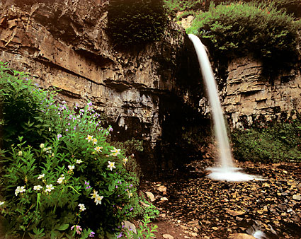 Waterfall and Wildflowers Mt. Timpanogos photography Wasatch Mountains Utah