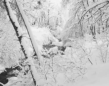 black and white photograph mill creek Wasatch Mountains, Utah, photo by David Whitten