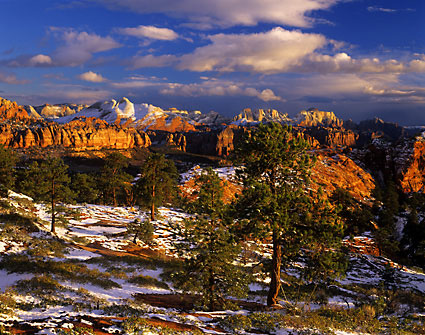 ponderosa pines zion national park photo utah Photograph by David Whitten