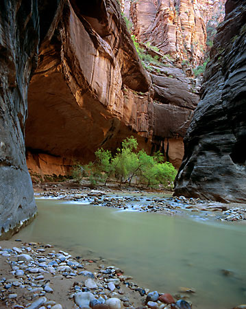 The Narrows Virgin River Zion National Park photo Utah photograph by David Whitten