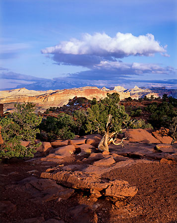 Capitol Reef National Park photograph Juniper Pinyon Henry Mountains