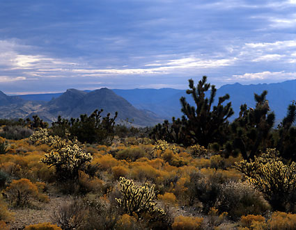 Beaver Dam Mountains Yucca Joshua Trees Cholla Mojave Desert photo by David Whitten