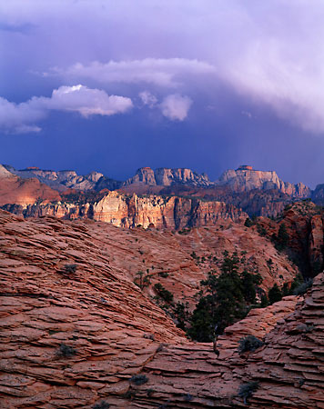 Zion National Park photography by David Whitten - Utah