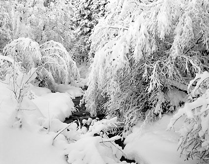 Mill Creek Winter Wasatch Mountains Utah Black and White Photograph
