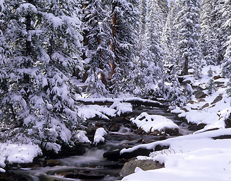 Lost Creek Winter Forest Uinta Mountains Utah