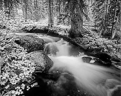 Ostler Fork, Uinta Mountains Utah photograph by David Whitten photographer Rocky Mountain Stream black and white High Uintas Wilderness