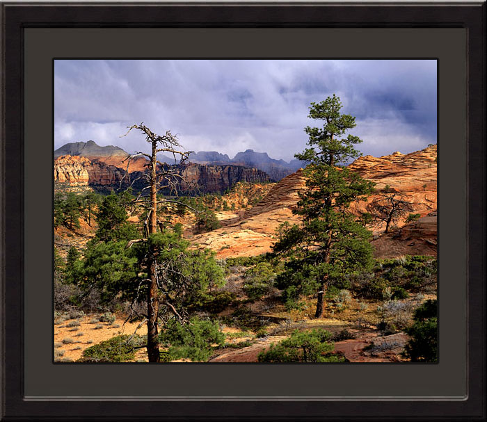 Zion National Park Photograph - Landscape and Wildlife Photography by David Whitten Fine Art Photographs, limited editions and stock photography