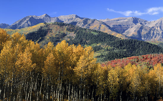 Mt. Timpanogos Autumn Aspens Wasatch Mountains, Utah