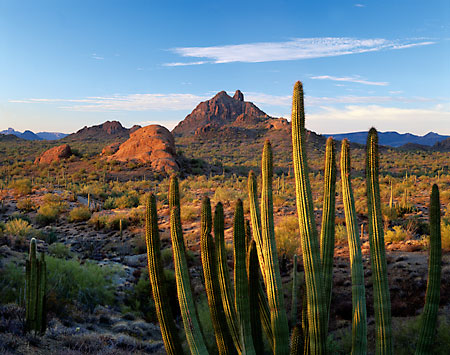 Little Ajo Mountains Organ Pipe Cactus Arizona